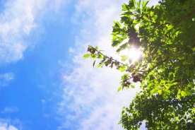 グループ会社「ぬくもりの森」夏季休業のお知らせ